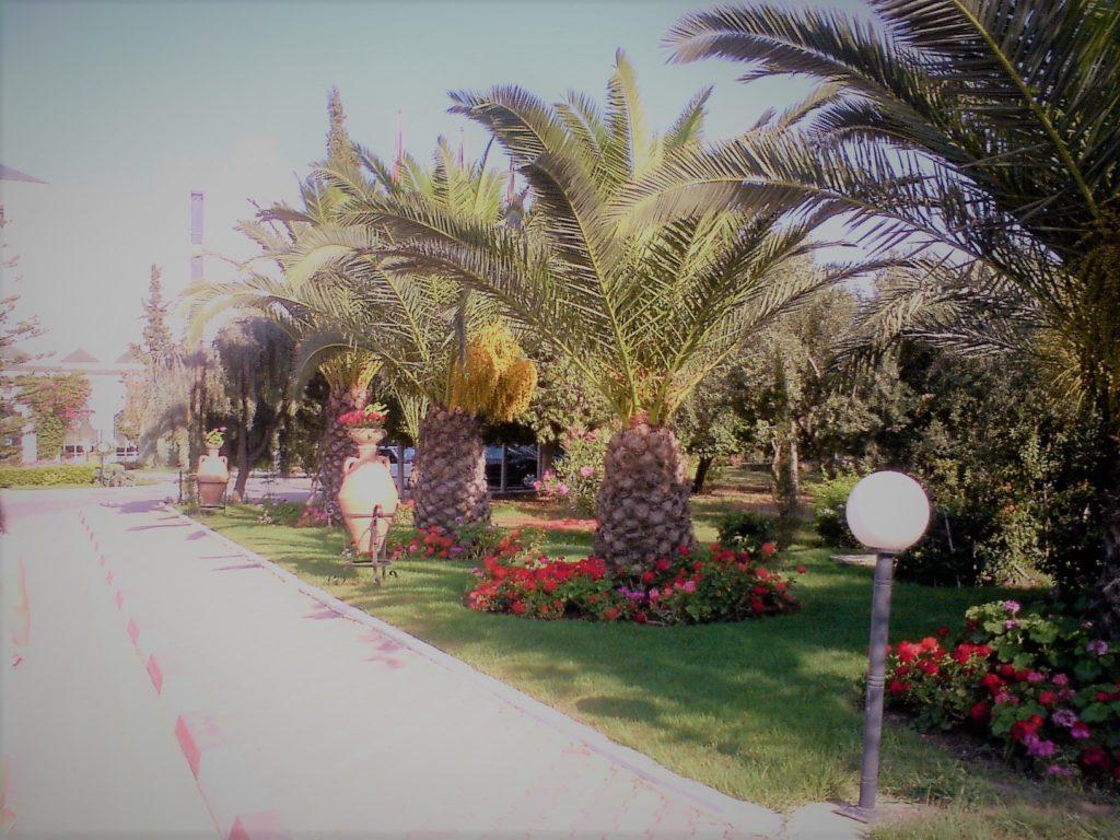 palmy v Tunise