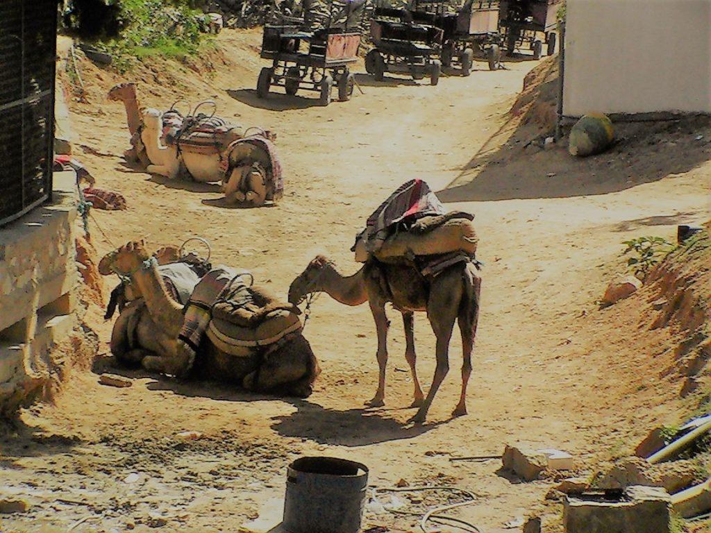 MarWix v Tunise